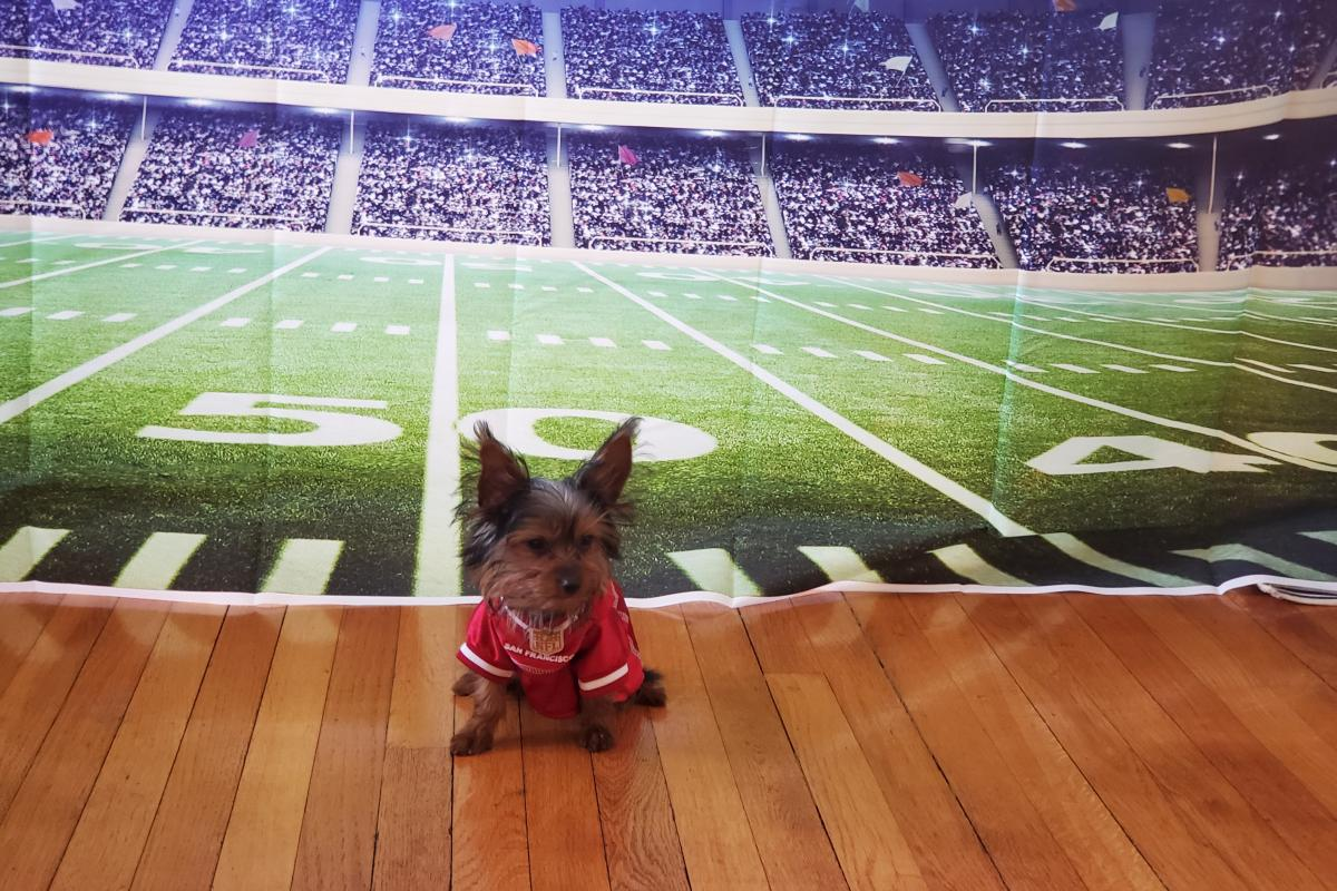 23. Ben is a 7month old Yorkie.  Ready for the Football Season!